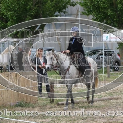 2019©Laurent-Simon-camargue-1585